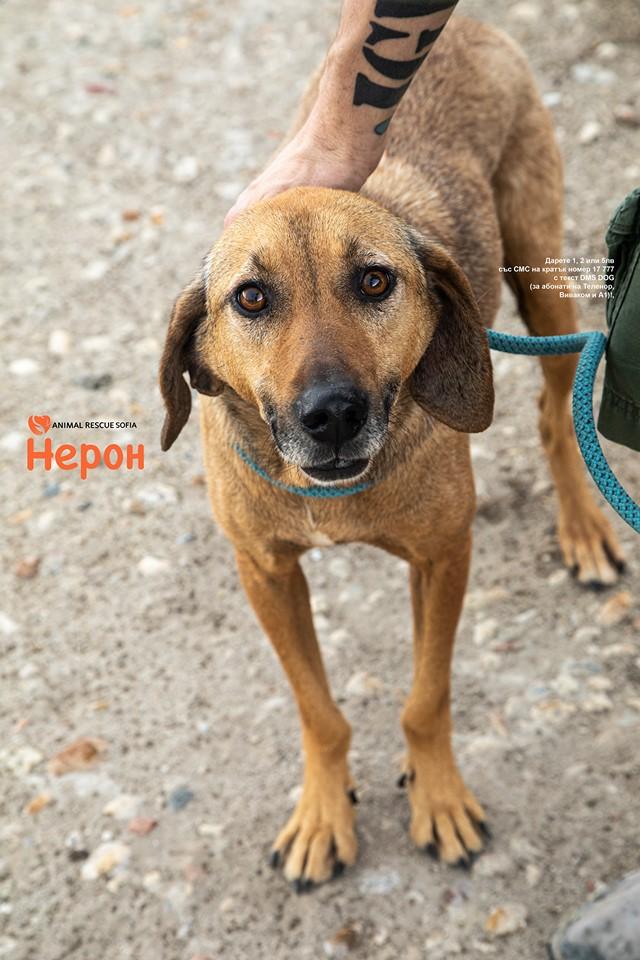 Animal Rescue Sofia Neron